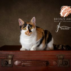 tortoiseshell-cat-sat-on-suitcase-in-studio-bronze-award