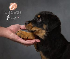 Rottweiler puppy with paw in owners hand