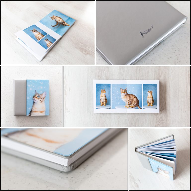 grey and blue album with photograph of bengal cats