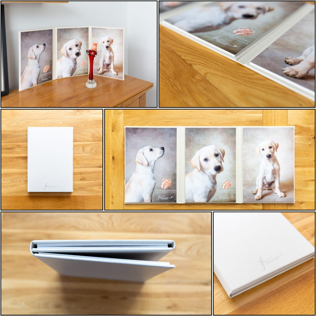 golden labrador puppy on trifold artwork