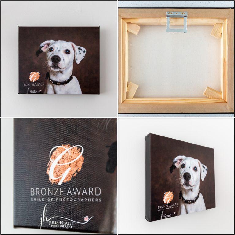 white puppy on brown background canvas print