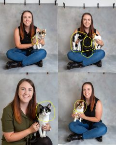 collage of multiple before and after images from pet pawtrait photoshoot