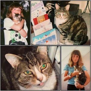 collage of girl with tabby kitten
